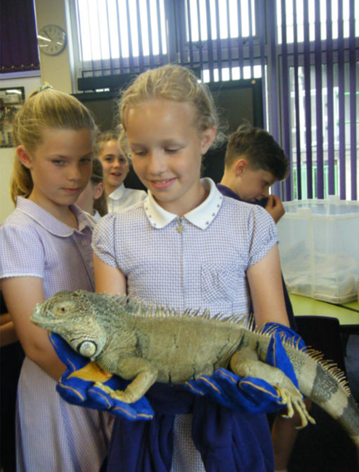 playing-with-reptiles